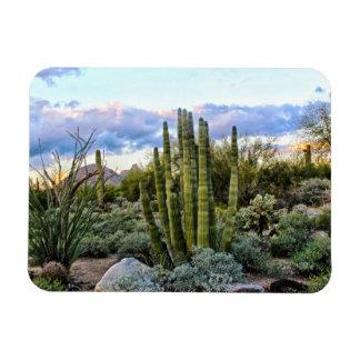 Scottsdale succulent Sunset Rectangular Photo Magnet