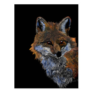 Scratchboard art Red Fox Postcard