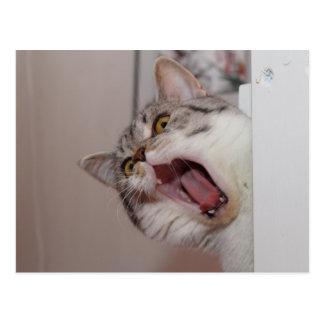 Screaming British Shorthair Postcard