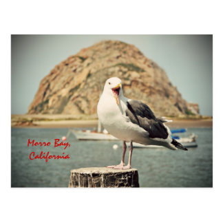 Screaming Seagull Morro Bay, California Postcard