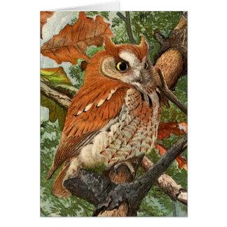 Screech Owl (brown phase) Card