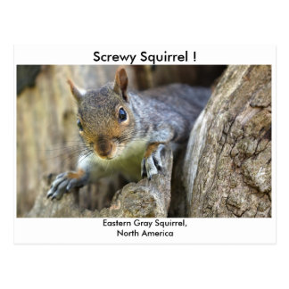 Screwy Squirrel! Postcard