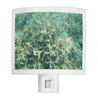 Scuba Diving Adventures Ocean Reef Blue Fish Nite Light