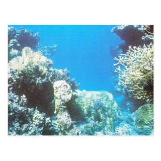 Scuba diving scenery in the Red Sea Postcard
