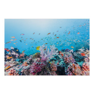 Scuba Diving With Colorful Reef And Coral Poster