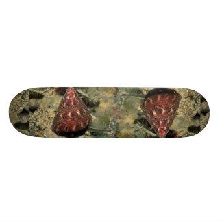 Sculptured top shell (Calliostoma euglyptum) Shell Skate Board Deck