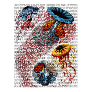 Sea Anemone Postcard