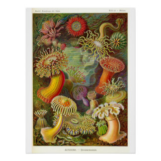 Sea Anemones Vintage Illustration Poster