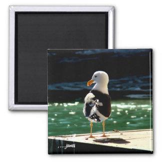 Sea Bird Magnet