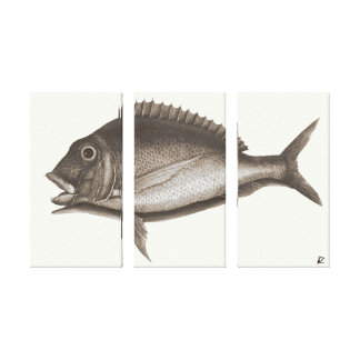 Sea bream canvas print