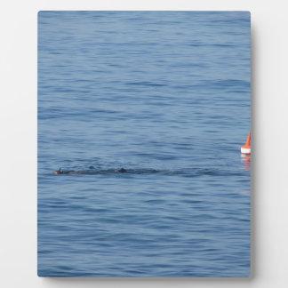 Sea diver in scuba suit swim in water plaque