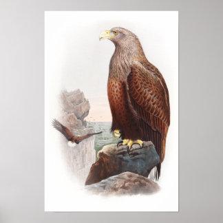 Sea Eagle John Gould Birds of Great Britain Nature Poster