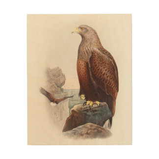 Sea Eagle John Gould Birds of Great Britain Nature Wood Canvas