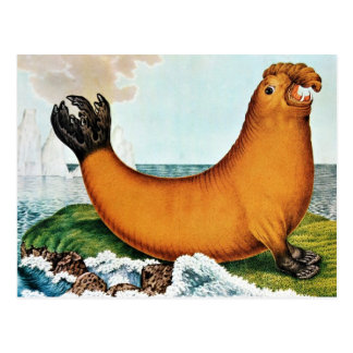 Sea Elephant Illustration (Zotl) Postcard