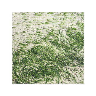 Sea Grass at Low Tide Canvas Print