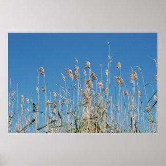 Sea Grasses Poster