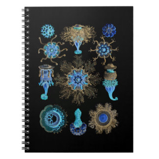 Sea Green Siphonophorae Notebooks