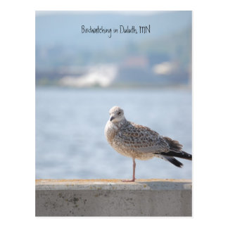 Sea Gull2, Birdwatching in Duluth, MN Postcard