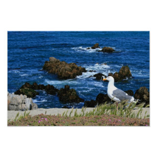 Sea Gull in front of Pacific Coastline, photo Poster