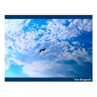 Sea gull Jonathan postcard