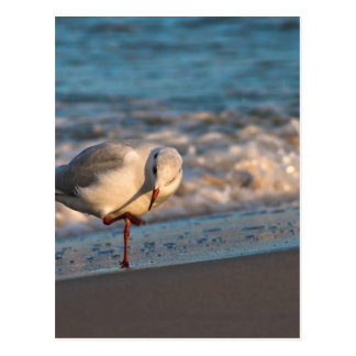 Sea gull on shore of the Baltic Sea Postcard