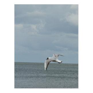 Sea gull postcard