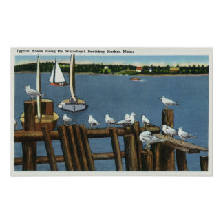 Sea Gulls and Sailboats Along the Waterfront Poster