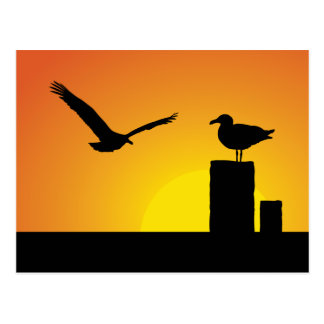 Sea Gulls At Sunset Postcard