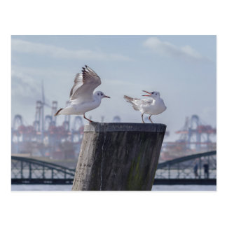 sea gulls in the port postcard
