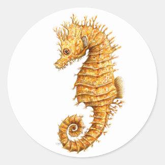 Sea horse Hippocampus hippocampus Classic Round Sticker