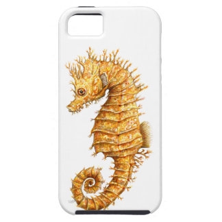 Sea horse Hippocampus hippocampus iPhone 5 Cover