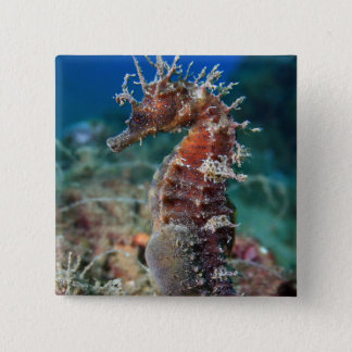 Sea Horse | Hippocampus Ramulosus 2 Inch Square Button