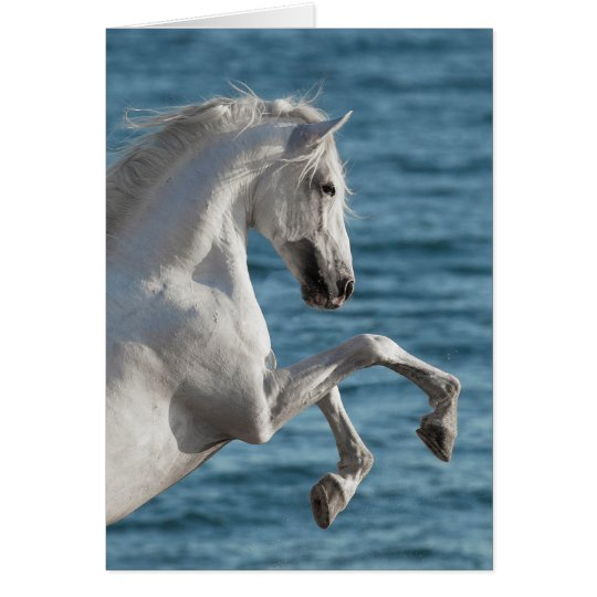 Sea Horse Rearing - Horse Greeting Card