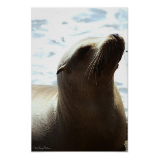 Sea Lion 2 Poster