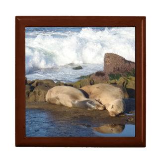 Sea Lion Admiring Itself Keepsake Box