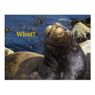 Sea Lion Attitude Postcard