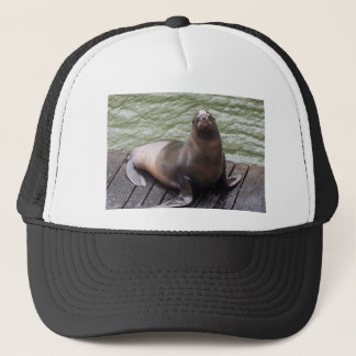 Sea Lion Hat