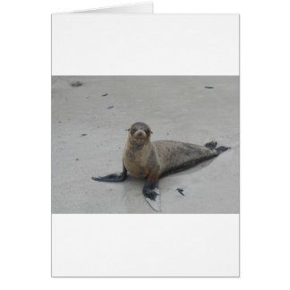 Sea Lion in the Galapagos Islands!! Card
