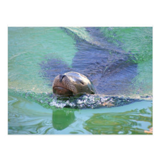 Sea Lion; In the Swim of Things! Postcard