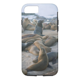 Sea Lion Lounging iPhone 7 Case