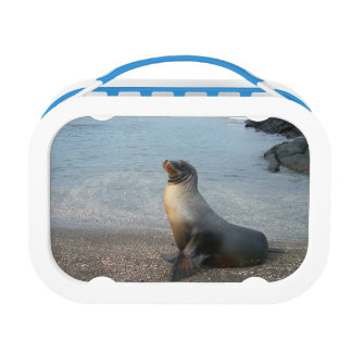 Sea Lion Lunch Box
