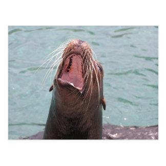 Sea Lion Mouth Open Postcard