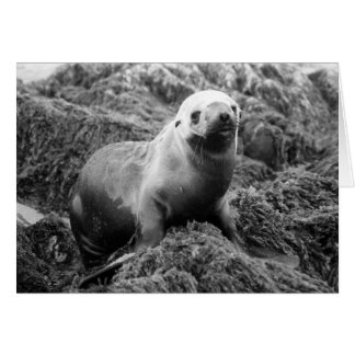 Sea Lion notecard