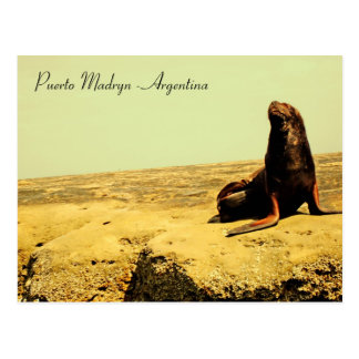 Sea Lion. Puerto Madryn - Argentina Postcard