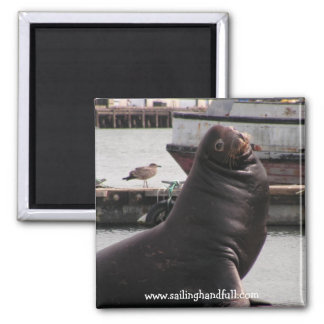 sea lion sailing handfull magnet