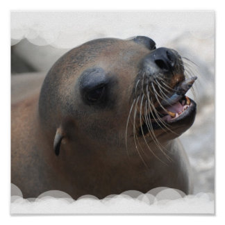Sea Lion Snacking Poster