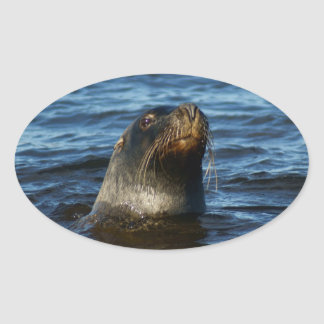 Sea Lion Oval Sticker
