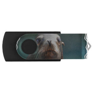 Sea Lion with Whiskers USB Flash Drive
