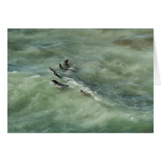 Sea Lions Cavorting in a Green Sea Card