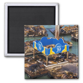 Sea Lions in San Francisco Square Magnet